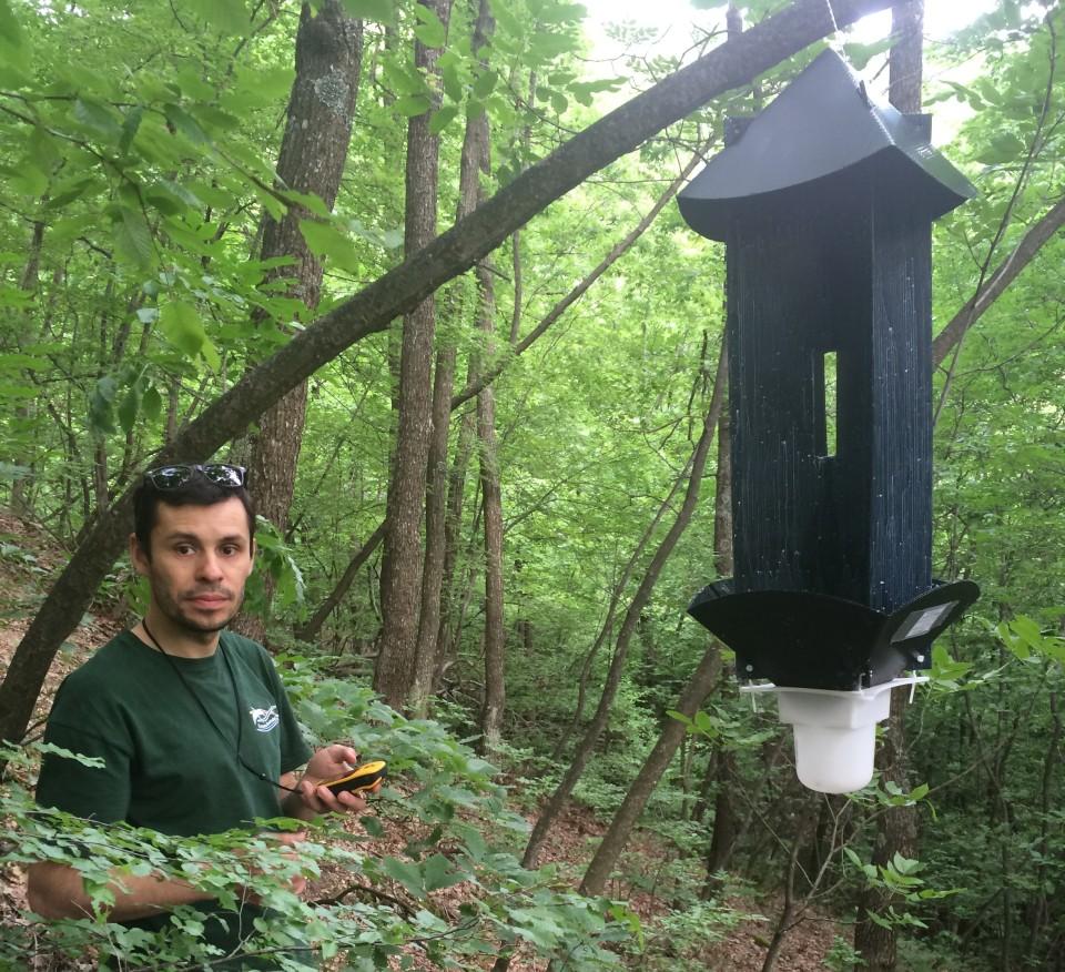 Hanging flight intercept traps and recording habitat data.