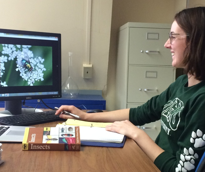 Ayden Wilson, PACE undergraduate research assistant crowdsourcing data on flower foraging flies.