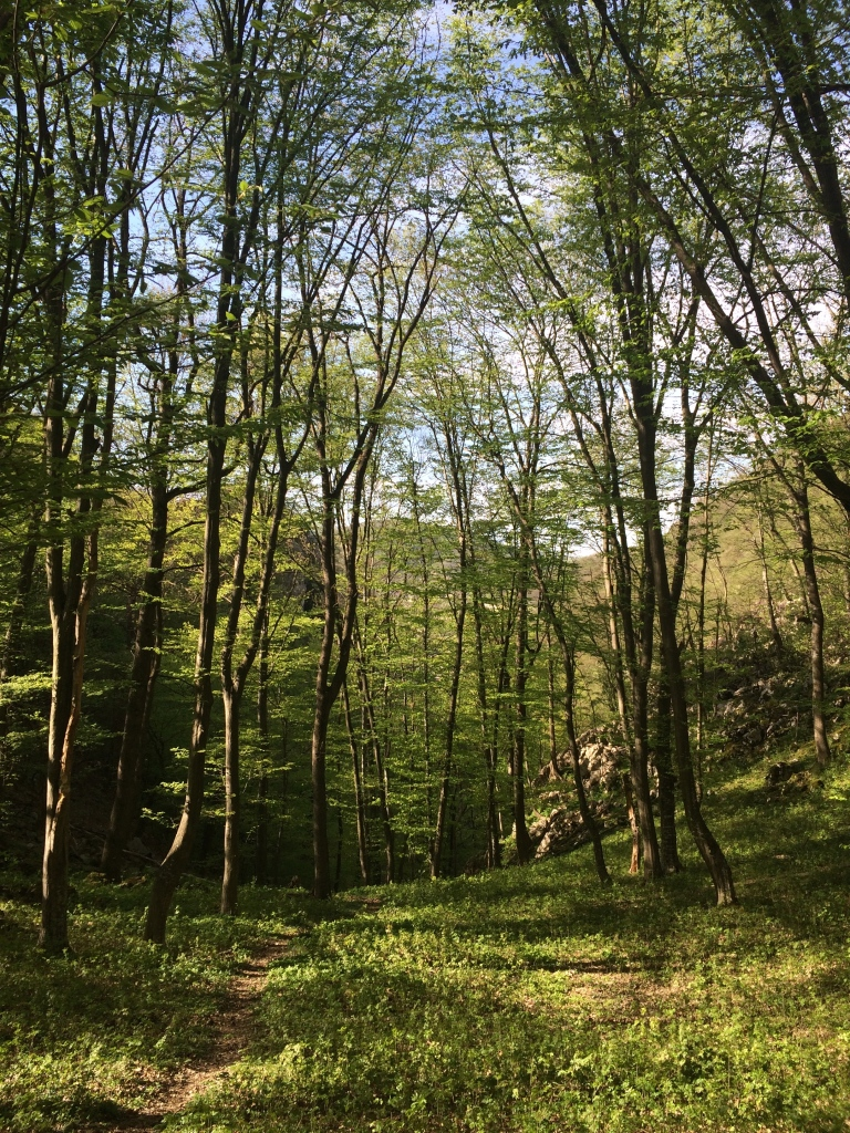 Noble chafer habitat, Iron Gates Natural Park, RO